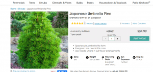 Spring Hill Nursery website product page for pine trees