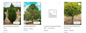 The Tree Center website product page for pine trees