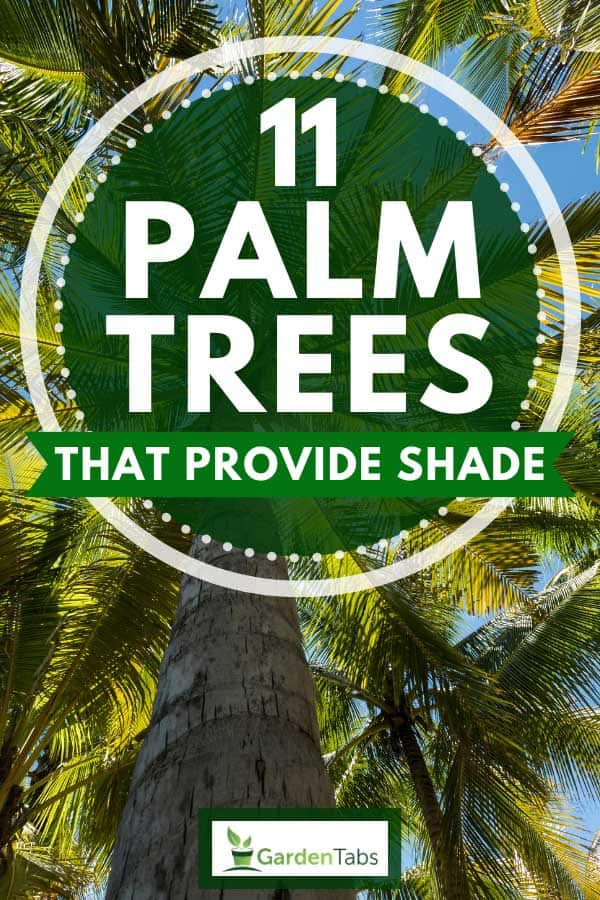 Tropical coconut palm trees with sunlight through leaves, 11 Palm Trees That Provide Shade