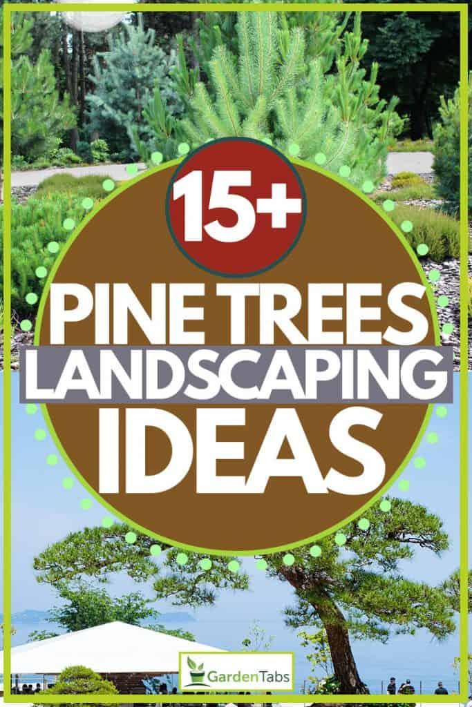 15 Pine Trees Landscaping Ideas Garden Tabs
