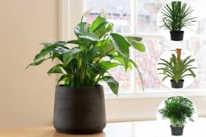 14 Large Indoor Plants For Low Light