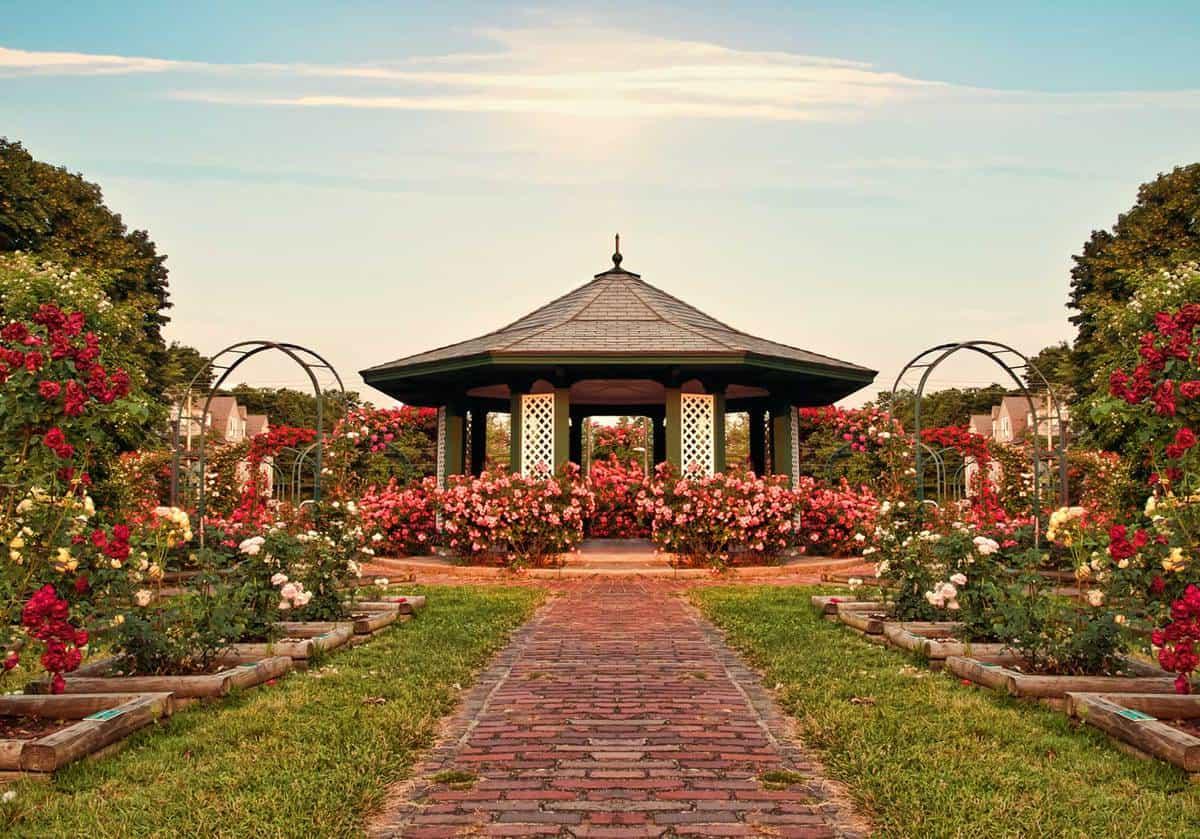 Beautiful formal rose garden late in the day