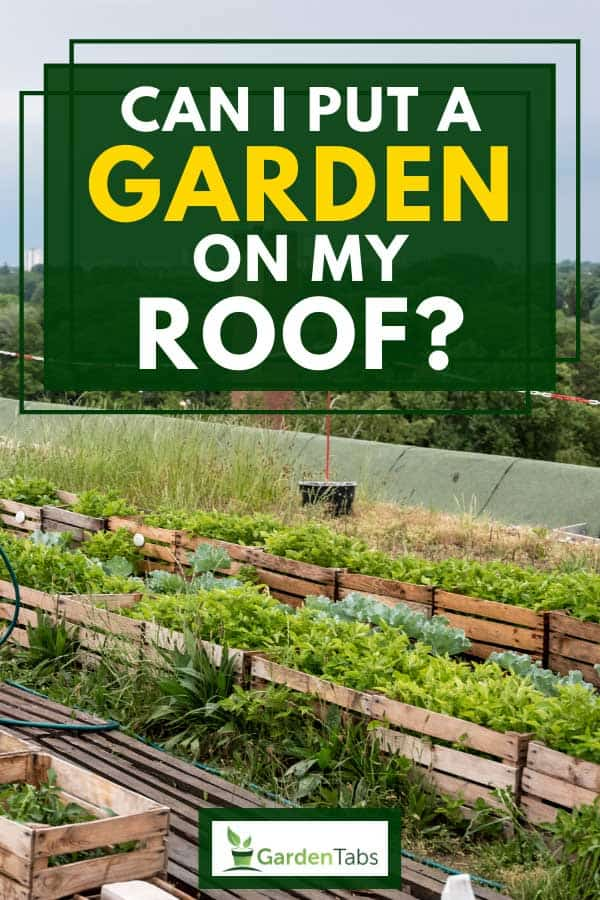 Herbs and plants in planter boxes on an urban roof garden, Can I Put A Garden On My Roof?