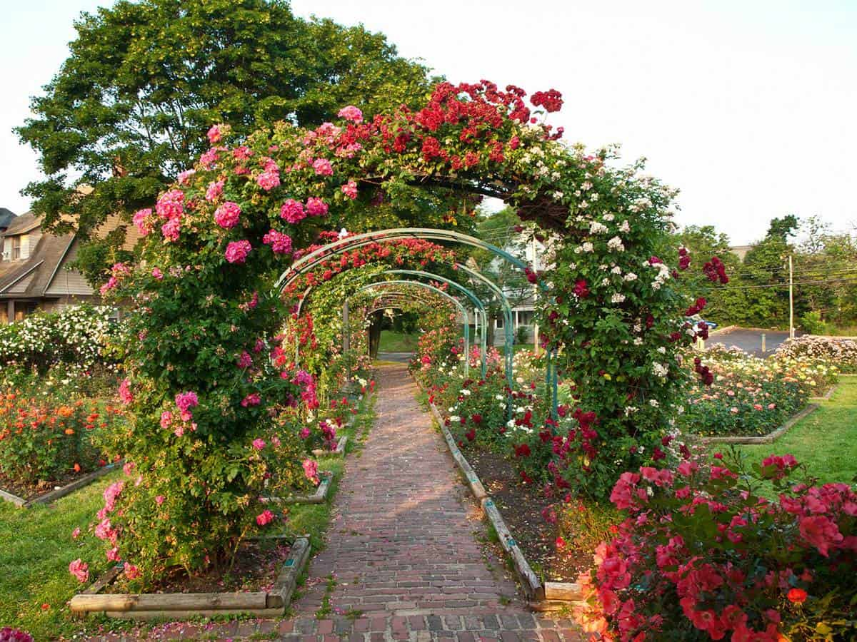 Formal rose garden with arching trellises