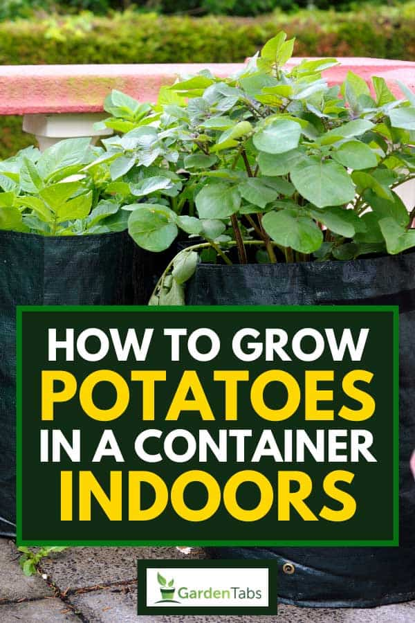 Potatoes being grown in deep eco-friendly bags, How To Grow Potatoes In A Container Indoors