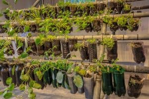 Can You Grow Vegetables Indoors All Year Round?