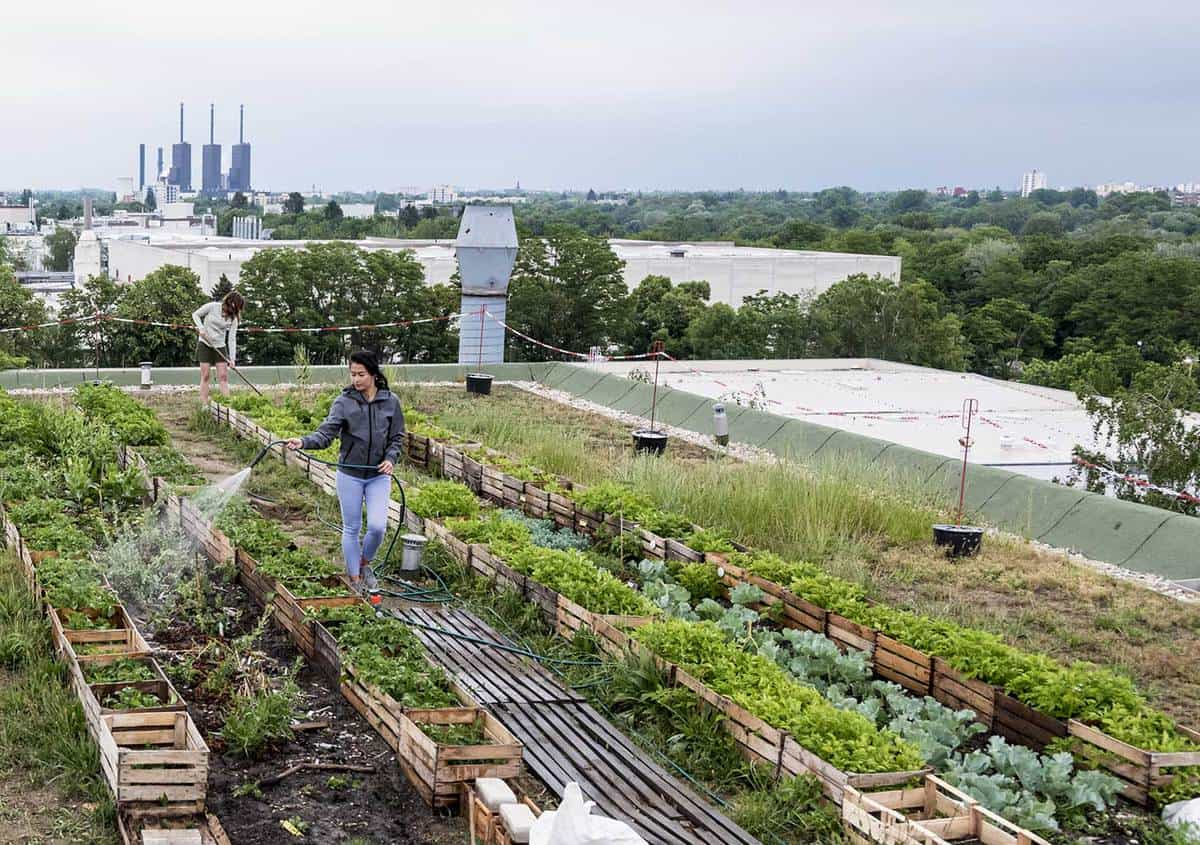 Young woman waters herbs and plants on a urban roof garden