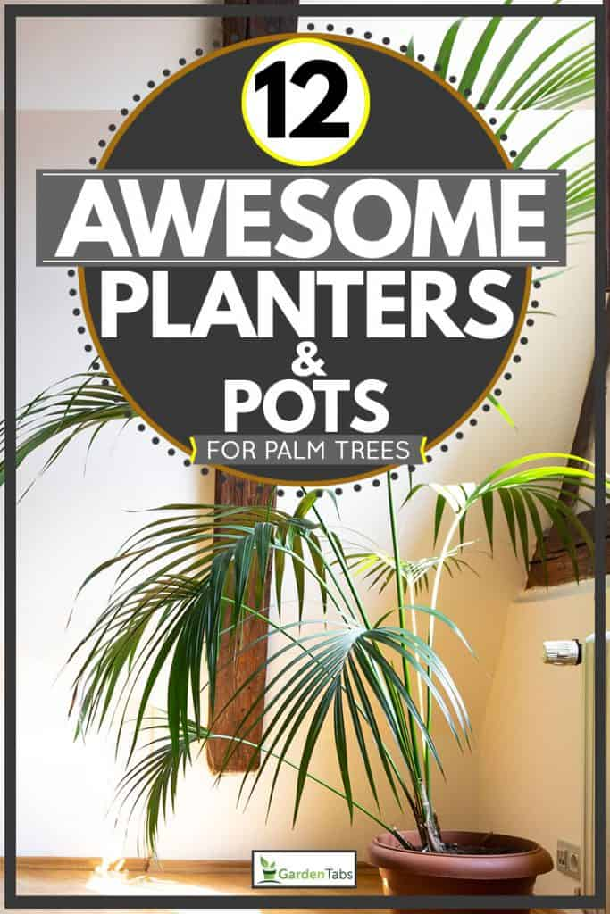 Palm tree planted in small vase placed at second floor of house, 12 Awesome Planters & Pots for Palm Trees