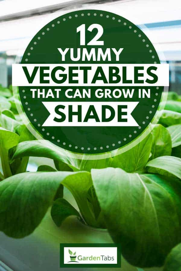 Greenhouse vegetable plants with LED light in an indoor farm, 12 Yummy Vegetables That Can Grow In Shade