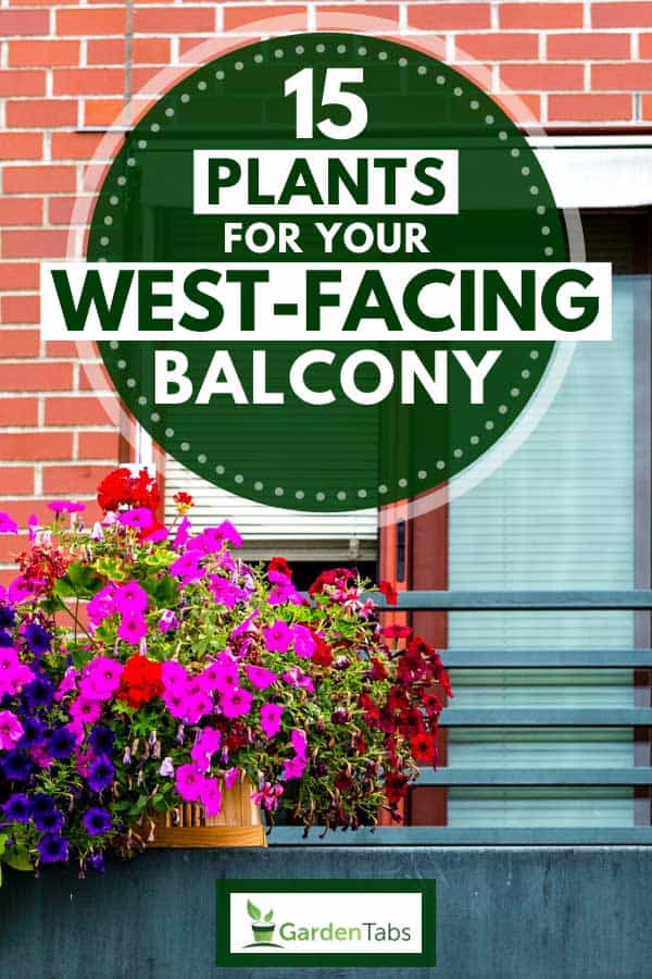 Balcony decorated with multi colored petunias, 15 Plants For Your West-Facing Balcony