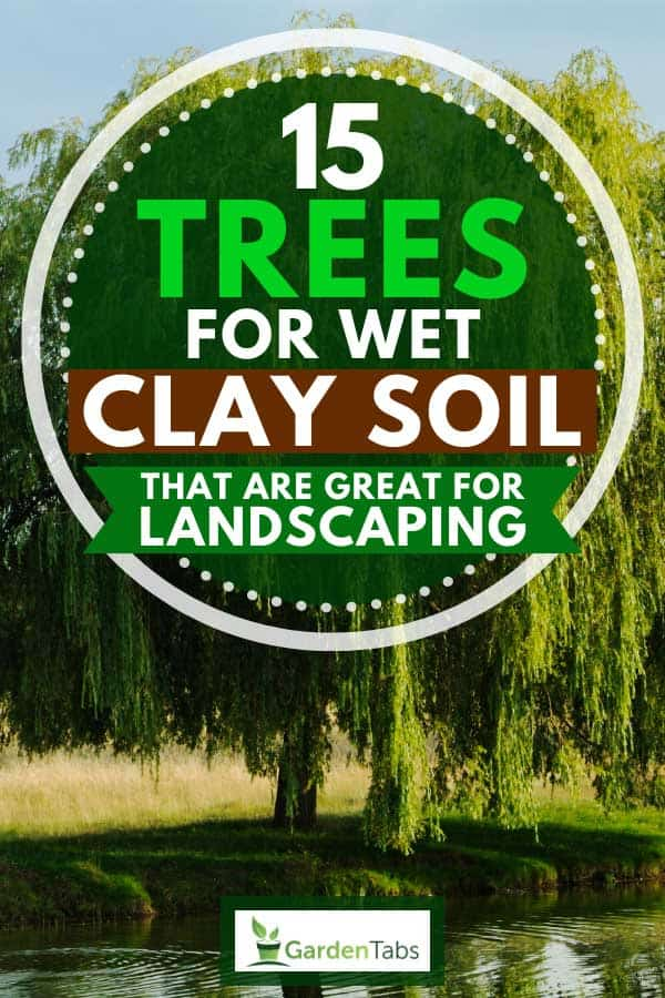 15 Trees For Wet Clay Soil That Are Great For Landscaping Garden Tabs