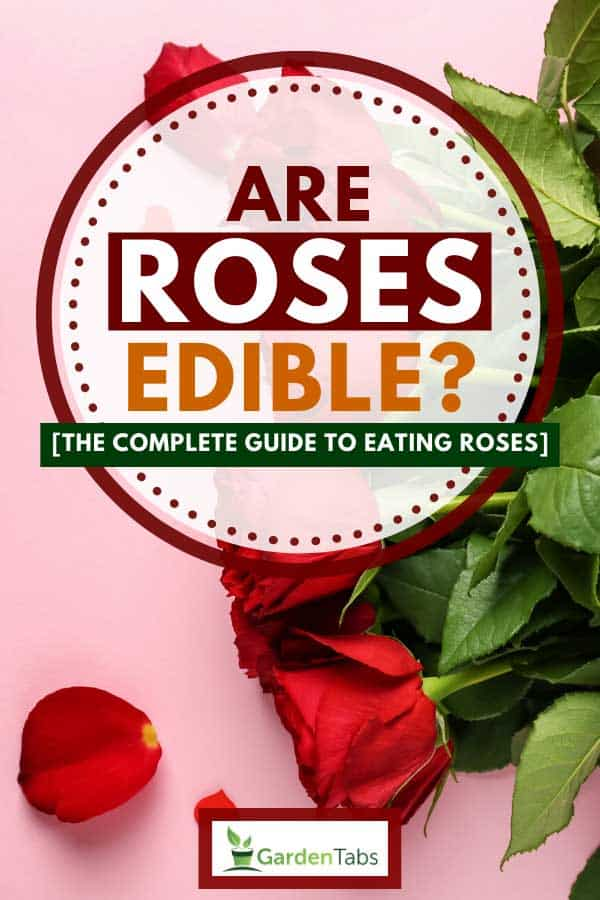 Beautiful red roses on pink color background, Are Roses Edible? [The Complete Guide to Eating Roses]