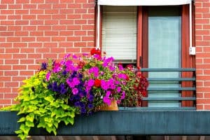 15 Plants For Your West-Facing Balcony
