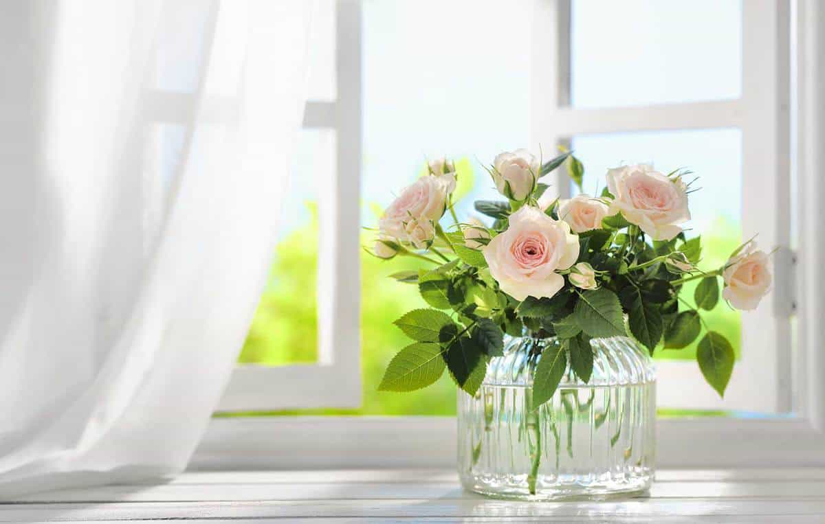 Bouquet of rose flowers in vase near window with curtain