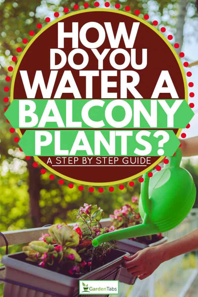 Beautiful woman watering her plant on her balcony on the hot summer sun, How Do You Water A Balcony Plant? [A Step-By-Step Guide]