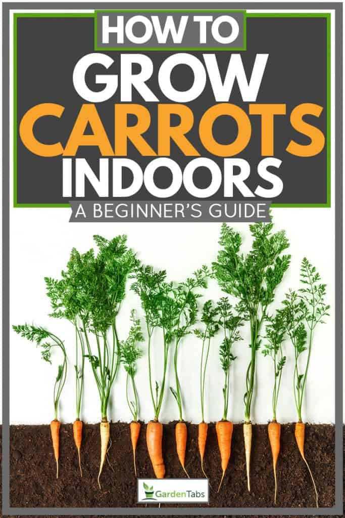 Woman planting carrots indoors at box planters, How To Grow Carrots Indoors [A Beginner's Guide]