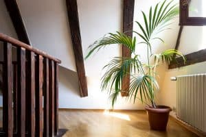 12 Awesome Planters & Pots for Palm Trees