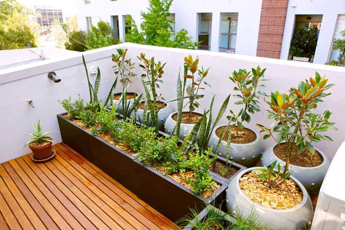 Urban roof terrace with plants.
