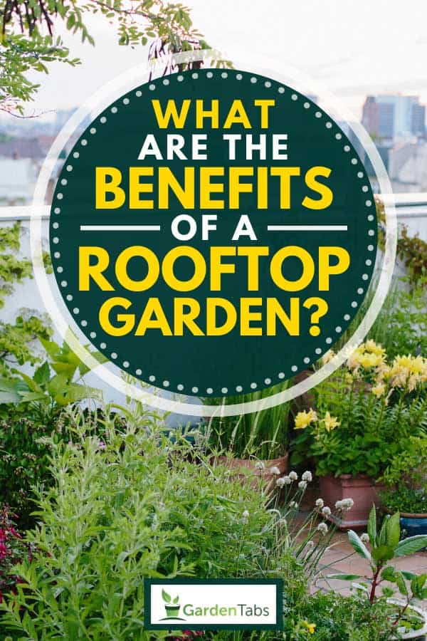 Urban rooftop garden with organic plants and vegetables, What Are The Benefits of a Rooftop Garden?