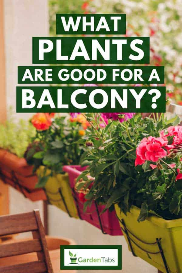 Plants and colorful flowers growing in pots on the balcony, What Plants Are Good For A Balcony?