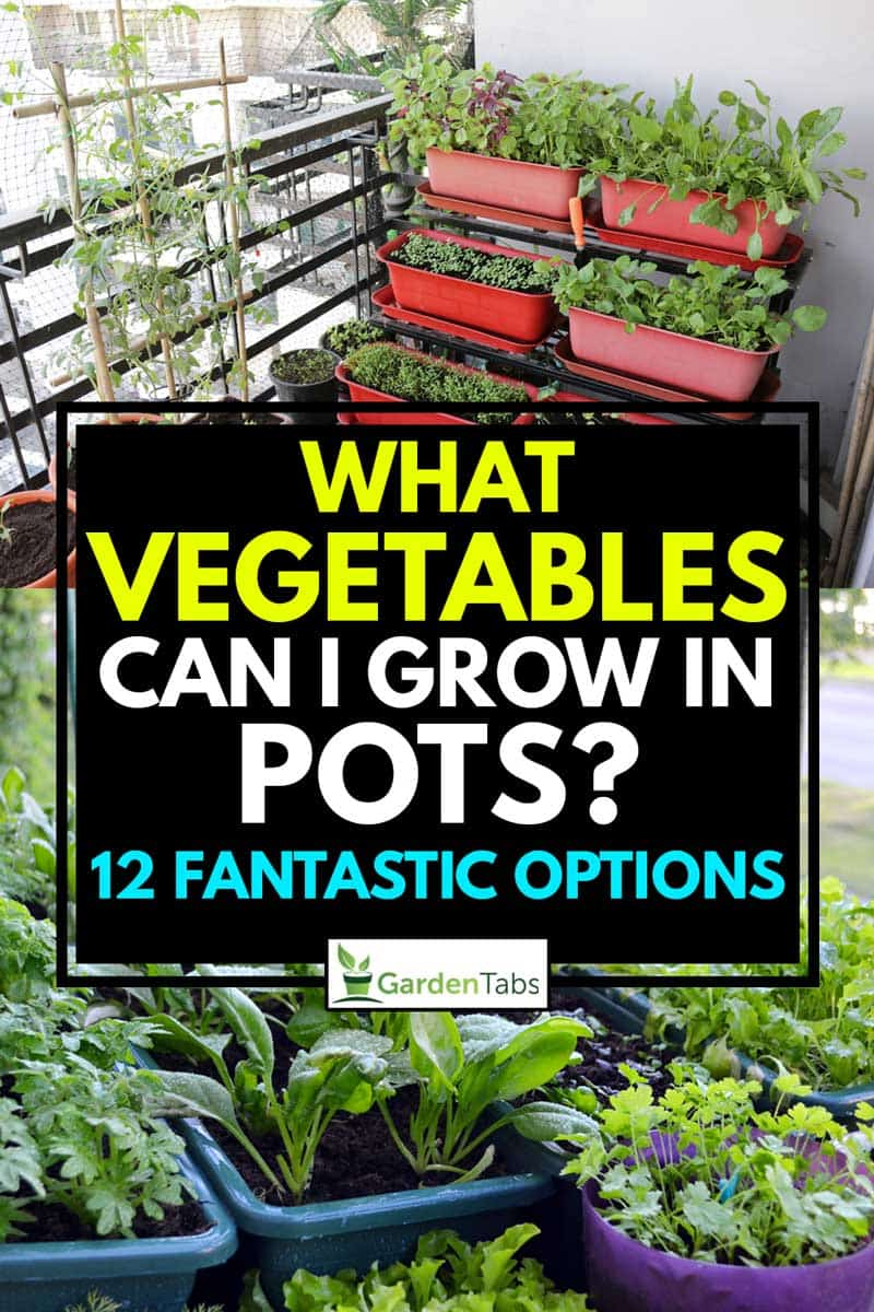 A collage of two vegetable gardening in pots, What Vegetables Can I Grow In Pots? [12 Fantastic Options]