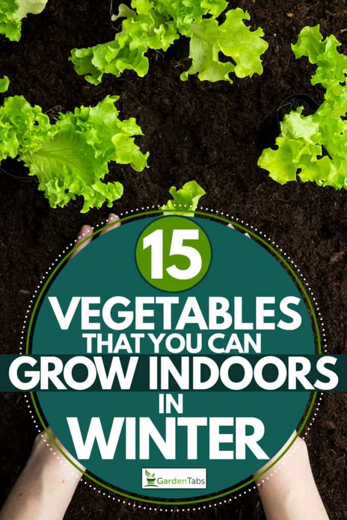 A woman planting a lettuce on fertile soil, 15 Vegetables That You Can Grow Indoors in Winter