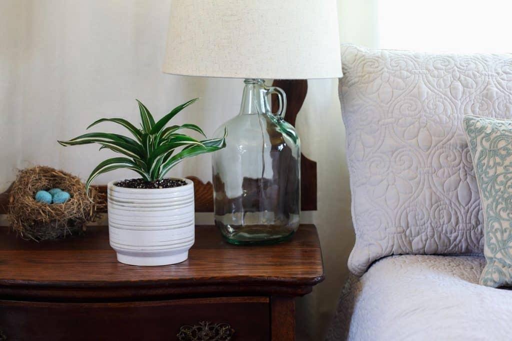 A Janet Craig Dracaena plant planted on a white ceramic vase