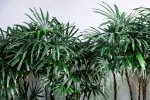8 Indoor Trees That Require Low Light