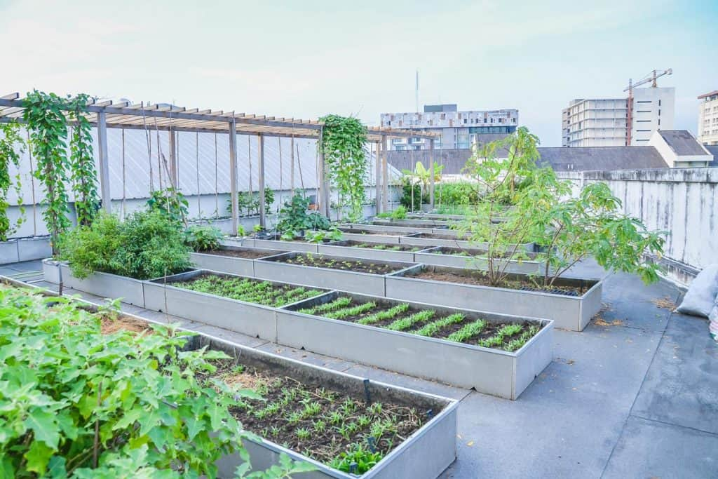 A clean and beautiful rooftop vegetable garden