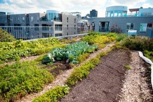 How To Create A Rooftop Vegetable Garden?
