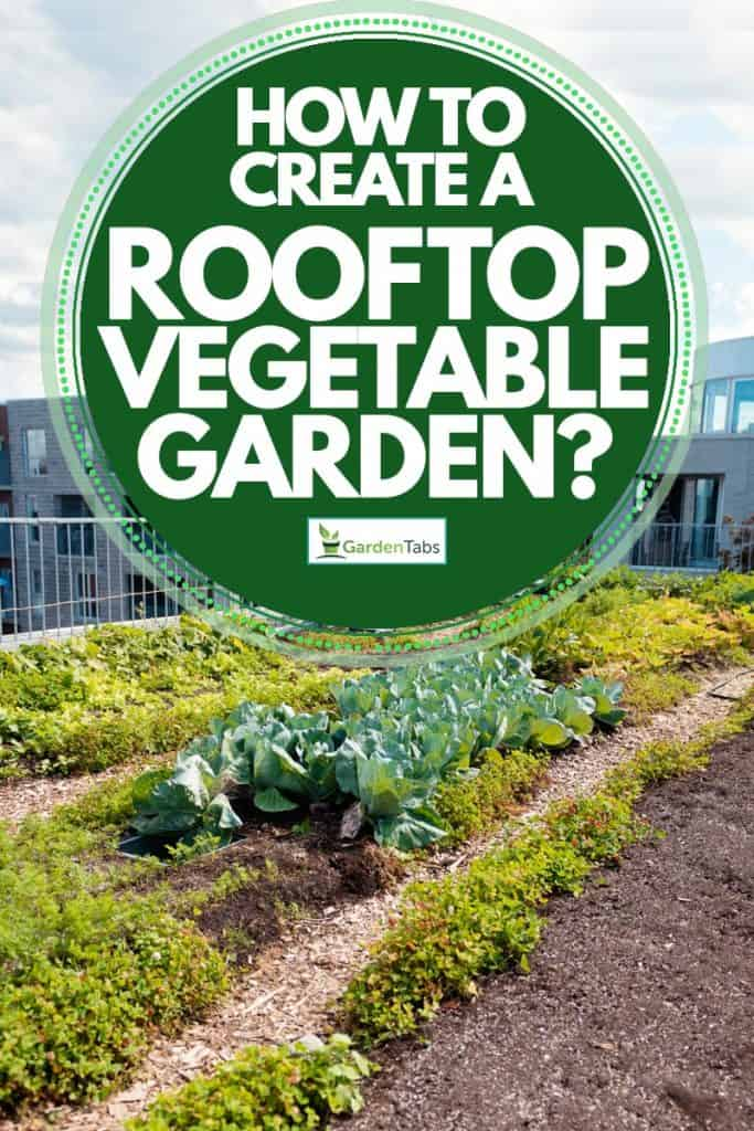 A view of a vegetable garden on the rooftop, How to Create A Rooftop Vegetable Garden?
