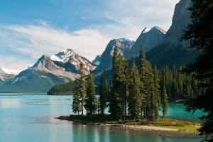 Lodgepole Pine Tree in Spirit Island, Maligne Lake, Lodgepole Pine Tree Care Guide for Beginners