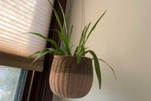 7 Hanging Plants that Can Grow Well in the Bathroom