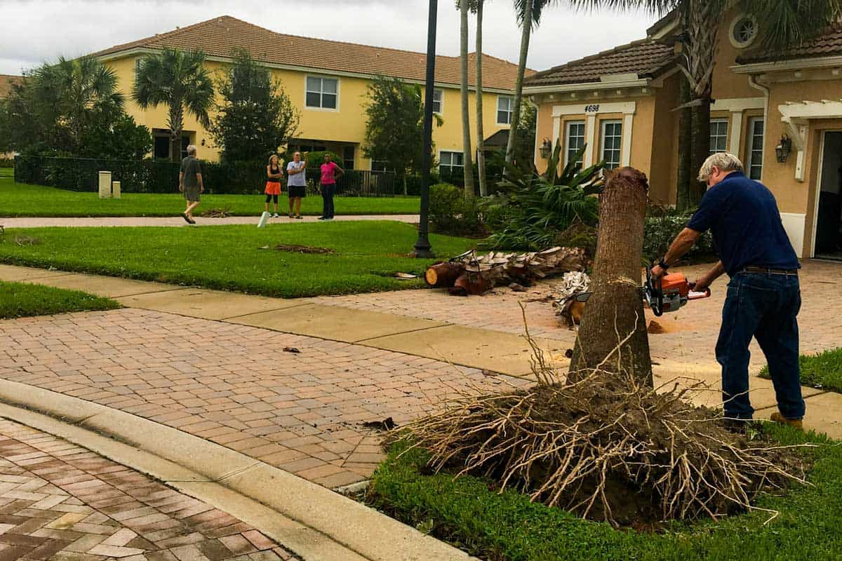 A man uses a chainsaw to remove a fallen palm tree from the front yard of his Florida home