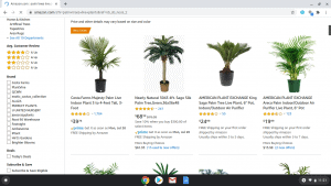 Amazon page showing palm trees for sale