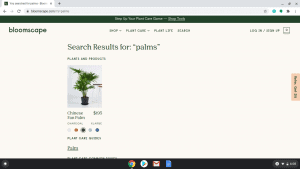 Bloomscape page showing palm trees for sale