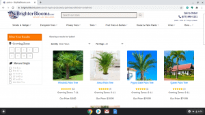 Brighter Blooms page showing palm trees for sale