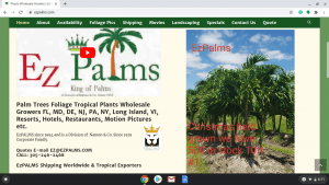 EZPalms page showing palm trees for sale