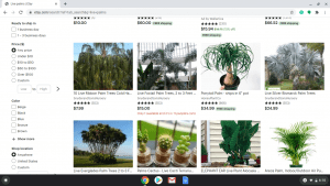 Etsy.com page showing palm trees for sale