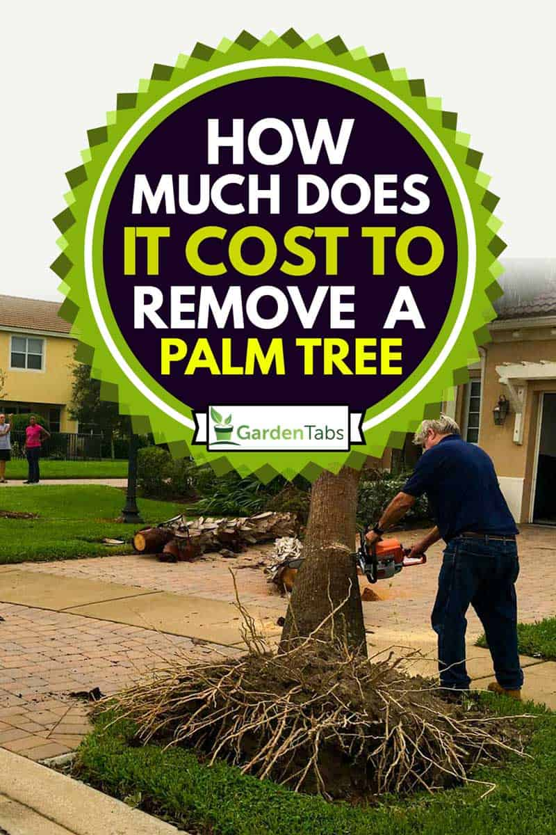 A man uses a chainsaw to remove a fallen palm tree from the front yard of his Florida home, How Much Does it Cost to Remove a Palm Tree?
