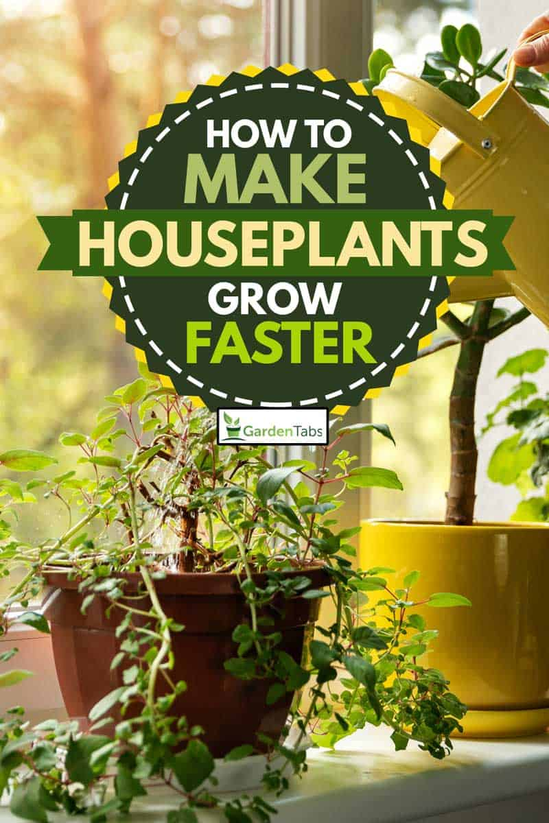 How to Make Houseplants Grow Faster?, hand with water can watering indoor plants on windowsill