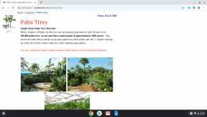 Jungle Music Palms & Cycads page showing palm trees for sale