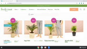 Lively Root page showing palm trees for sale