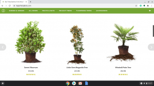 My Perfect Plants page showing palm trees for sale