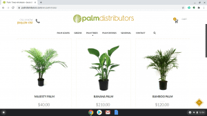 Palm Distributors page showing palm trees for sale