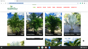Palm Trees Direct page showing palm trees for sale