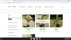 Plant Box page showing palm trees for sale