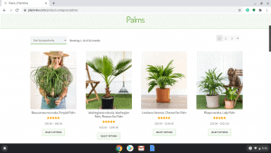 Plantvine page showing palm trees for sale