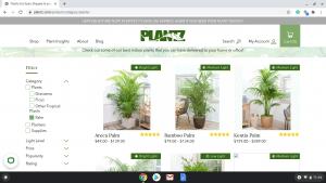 Plantz.com page showing palm trees for sale