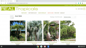 Real Tropicals page showing palm trees for sale